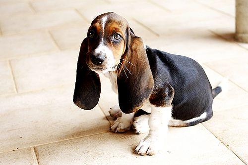 la promoción de ventas y el perro de paulov
